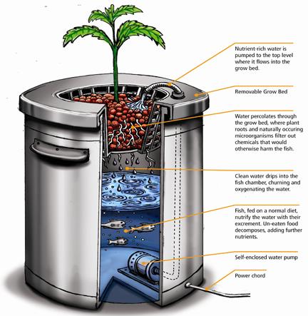 Grow tips organica garden supply hydroponics for Indoor gardening for dummies