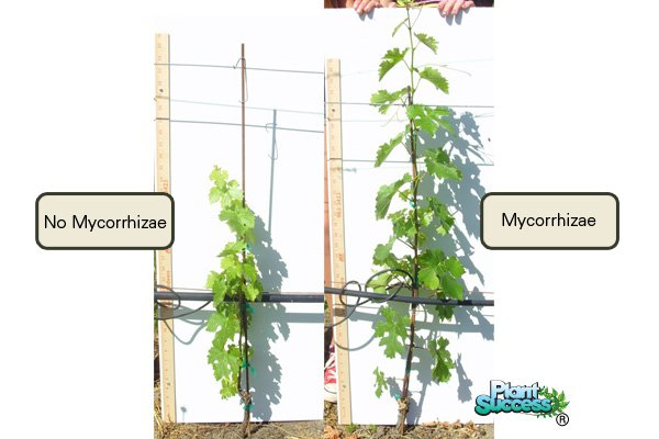 Growing with Mycorrhizae & Inoculants